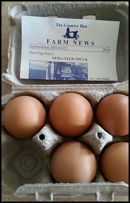 Egg-Carton-Newsletter